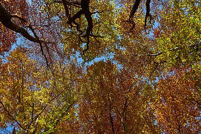 Herbst - p587m1466532 von Spitta + Hellwig