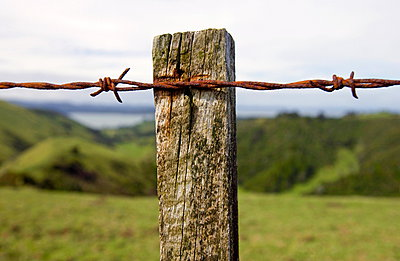 Barbed wire on post covered with moss and lichens - p871m884445 by Tim Graham