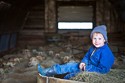 Little boy in sheep shelter - p937m709978 by Karolina Doleviczenyi