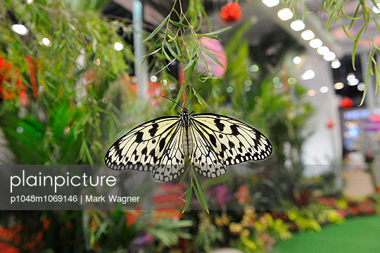 Butterfly - p1048m1069146 by Mark Wagner