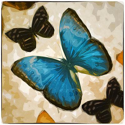 Big Blue Butterfly - p1154m2245395 by Tom Hogan