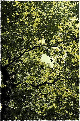 Canopy of Leafes - p358m755867 by Frank Muckenheim