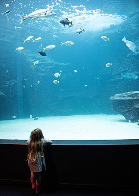 Two Oceans Aquarium, girl marvels at sea animals - p1640m2246230 by Holly & John