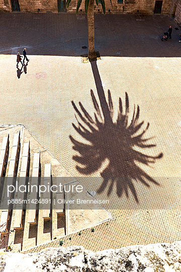 Silhouette of palm tree - p885m1424891 by Oliver Brenneisen