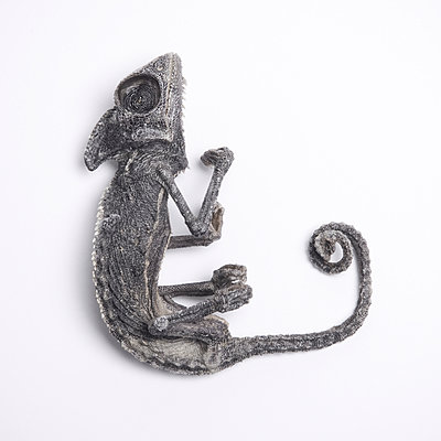 Dead chameleon - p1670m2253032 by HANNAH