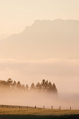 Morning mist in Bavaria - p533m2065596 by Böhm Monika