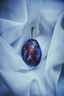 Single plum close-up - p968m2020200 by roberto pastrovicchio