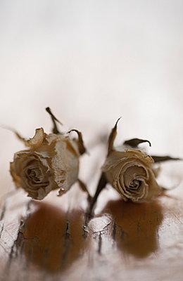 Dry roses - p971m698790 by Reilika Landen