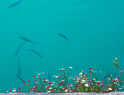 Aquarium - p1279m1144142 by Ulrike Piringer