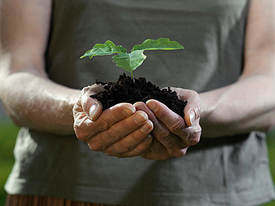 Cupped human hands holding a plant in loose soil - p3017796f by Paul Hudson