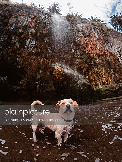 Dog on the beach under a waterfall - p1166m2130537 by Cavan Images