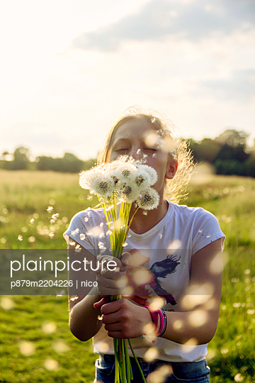 Girl blowing dandelion clocks - p879m2204226 by nico