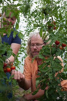 Gemüseanbau - p502m963441 von Tomas Adel