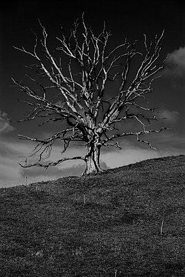 Dead tree - p867m1044853 by Thomas Degen