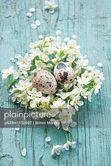 Osternest mit weißen Blüten - p533m1152697 von Böhm Monika