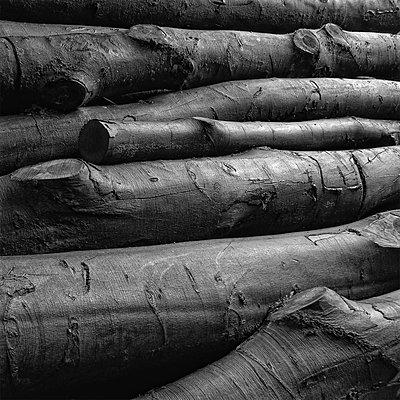 Holzwirtschaft - p1578m2150525 von Marcus Hammerschmitt