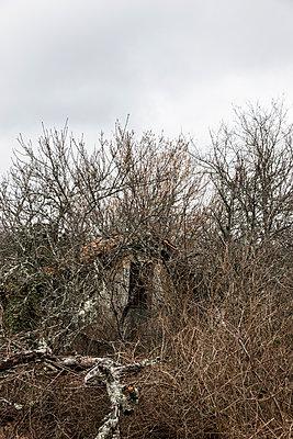 Überwucherte Steinhütte - p248m1538246 von BY