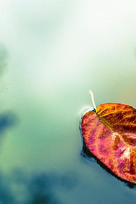 floating leaves - p1228m1488520 by Benjamin Harte