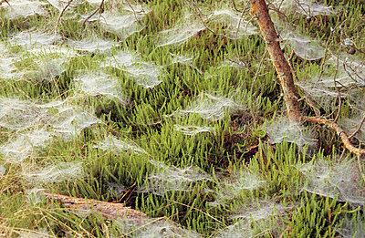 Spinnenweben - p3050089 von Dirk Morla
