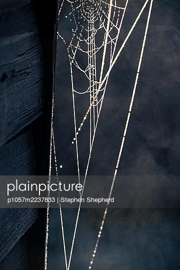Spiders web - p1057m2237833 by Stephen Shepherd