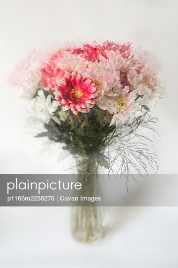 Abstract view of cut flowers in pink and white on pale background - p1166m2258270 by Cavan Images