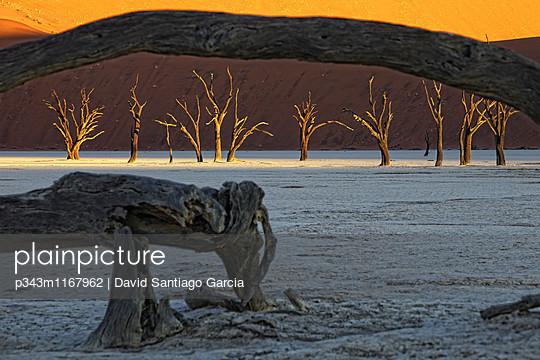 p343m1167962 von David Santiago Garcia