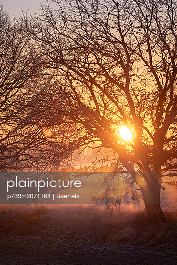 Sonnenaufgang im Frühnebel - p739m2071164 von Baertels