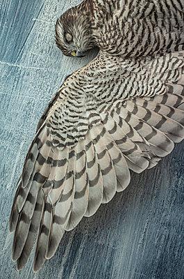 Dead bird - p971m2125015 by Reilika Landen
