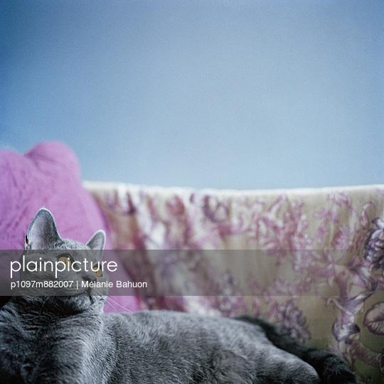 Katzenportrait - p1097m882007 von Mélanie Bahuon