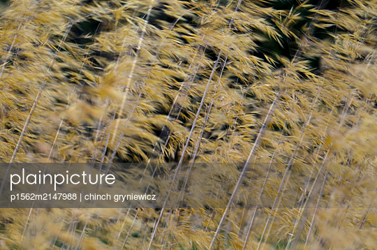 Blurred Grasses in Wind - p1562m2147988 by chinch gryniewicz