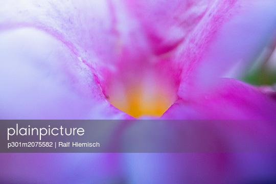 p301m2075582 von Ralf Hiemisch