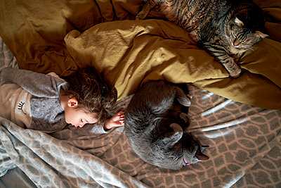 Toddler girl and two cats sleeping on bed, top view - p300m2103183 von Gemma Ferrando