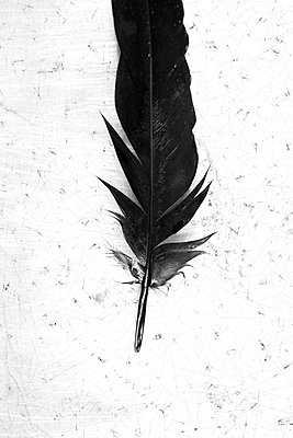 Black feather - p450m2044431 by Hanka Steidle