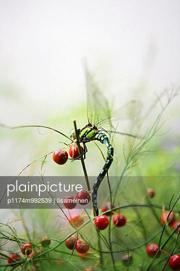 Libelle - p1174m992539 von lisameinen