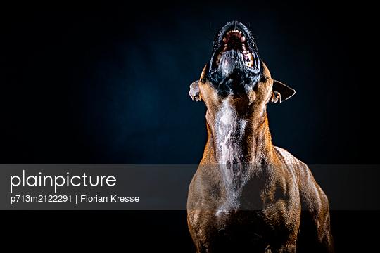 p713m2122291 by Florian Kresse