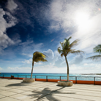 Palm trees at a pier in Island Cozumel, Caribbean - p1084m1036809 by GUSK