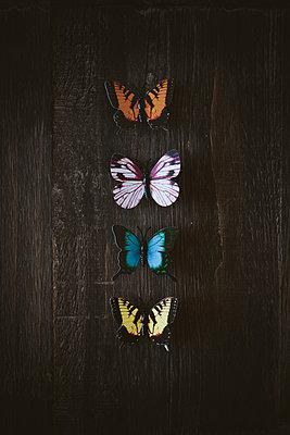 Schmetterlinge aufgereiht auf einem Tisch - p946m956218 von Maren Becker