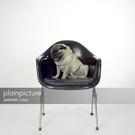 Dog yawning - p4060389 by clack