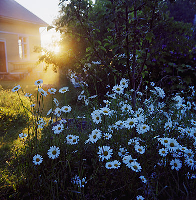 The Sun Shines In The Garden, Ostergotland  - p847m1529178 by Mikael Andersson
