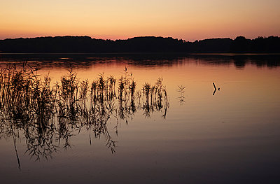 Forest lake - p162m1093888 by Beate Bussenius