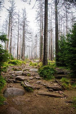 Waldsterben im Harz - p171m854020 von Rolau