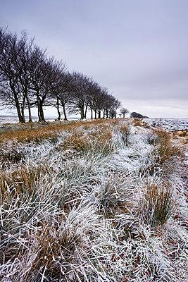 Snow dusted winter landscape by Alderman's Barrow Allotment, Exmoor National Park, Somerset, England, United Kingdom, Europe - p8713023 by Adam Burton