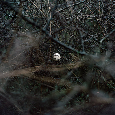 Single egg hidden in the brushwood - p1468m1558914 by Philippe Leroux