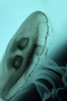 Medusa - p4500483 von Hanka Steidle