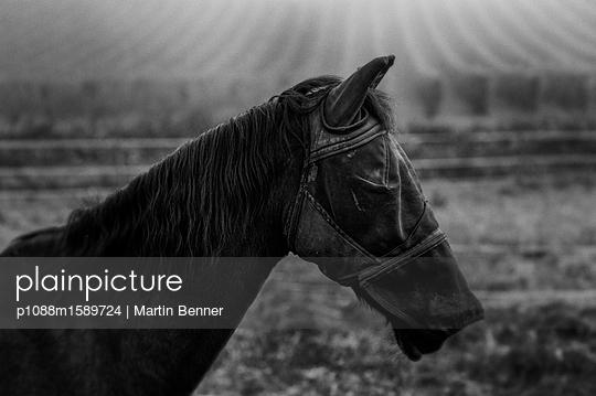 Pferd mit Sichtschutz - p1088m1589724 von Martin Benner