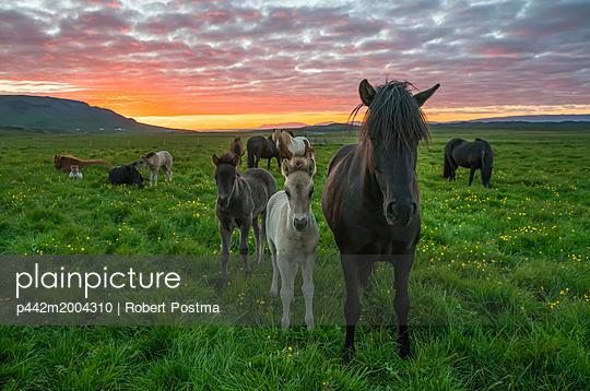 p442m2004310 von Robert Postma