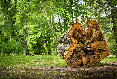 Austria, Burgenland, Bad Taztmannsdorf, hollow tree trunk, tree log - p300m2012493 von EJW