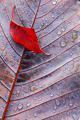 Autumn leaves - p307m974264f by Mamoru Muto