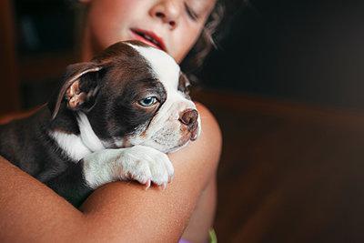 Girl hugging Boston Terrier puppy - p924m1422817 by Rebecca Nelson