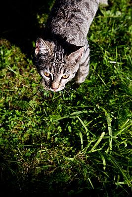 Little cat - p2280638 by photocake.de